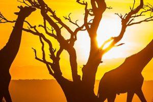 Daleka putovanja - Kenija